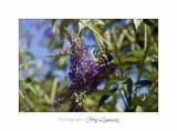 Nature animal Jardin Papillon IMG_8284.jpg
