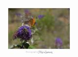 Nature animal Jardin Papillon IMG_8321.jpg