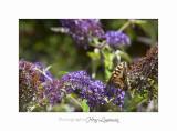 Nature animal Jardin Papillon IMG_8327.jpg