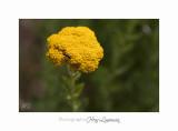 Nature animal Jardin Papillon IMG_8398.jpg