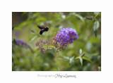 Nature animal Jardin Papillon IMG_8401.jpg