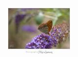 Nature animal Jardin Papillon IMG_8404.jpg