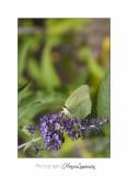 Nature animal Jardin Papillon IMG_8408.jpg