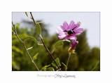 Nature animal Jardin Papillon IMG_8425.jpg
