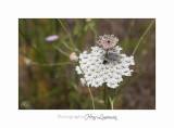 Nature animal Jardin Papillon IMG_8437.jpg