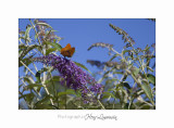 Nature animal Jardin PapillonIMG_8285.jpg
