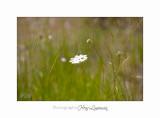 Nature fleur Jardin IMG_8366.jpg