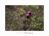 Nature fleur Jardin IMG_8445.jpg