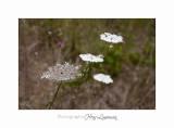 Nature fleur JardinIMG_8441.jpg