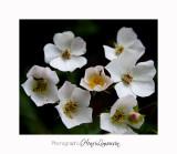 Nature fleur jardin IMG_7590.jpg