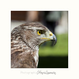 Nature Animal Rapace IMG_0221.jpg