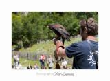 Nature Animal Rapace IMG_0227.jpg