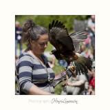 Nature Animal Rapace IMG_0238.jpg