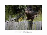Nature Animal Rapace IMG_0253.jpg