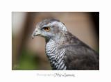 Nature Animal Rapace IMG_0301.jpg