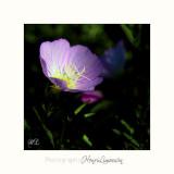 Nature fleur MIP IMG_0440.jpg