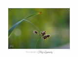 Nature plante Fontmerle IMG_7500.jpg