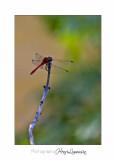 Nature animal vaugrenier IMG_0358.jpg