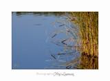 Nature paysage vaugrenier IMG_0345.jpg