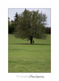 Nature arbre IMG_2591.jpg