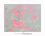 Nice coul vert Fleur IMG_4058.jpg