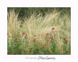 Nice coul vert fleur IMG_4055.jpg