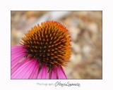 nature fleur IMG_4053.jpg