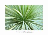 Nature plante IMG_4061.jpg
