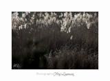 Fontmerle hiver 2014 12 IMG_4506.jpg