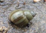 Miscellaneous Invertebrates