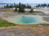 Mimulus Pool