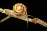 Other Invertebrates of Ecuador II