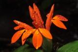 Flora of Ecuador II