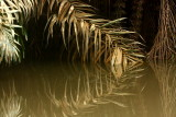 reflected palm