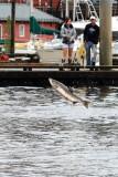 dockside leap