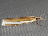 5344 Wide-stripe Grass-veneer (Crambus unistriatellus)