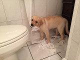 Caught dragging the toilet paper all over the house.
