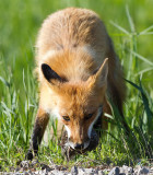 fox 14