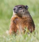 groundhog 5