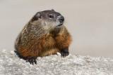 groundhog 6