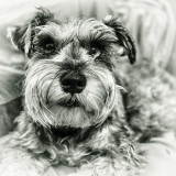 PUP IN BW