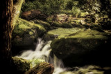 rocky stream in the Smokies