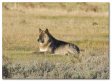 Yellowstone National Park April/May 2015