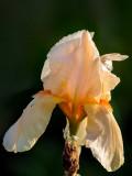 Cirrus Beauty 2