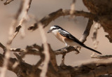 Birds in Oman