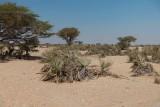 Wadi Rabkut