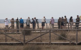 Looking for a Lesser Crested Tern