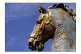 il Cavallo di Marc' Aurelio