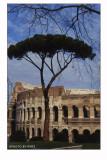 Il pino e il Colosseo