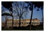 L'albero spoglio del Colosseo